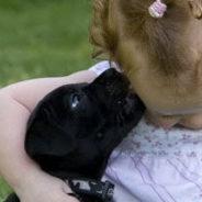 Pups beschikbaar voor de echte liefhebbers!